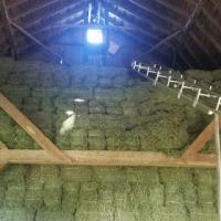 Top Grade hay ( Alfalfa, Timothy, POat, Teff, Bemuda,Eragrostis) bales