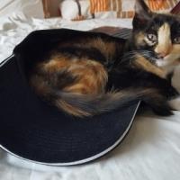 Missing Kitten Tortoiseshell
