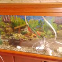 Large Fish Aquarium with Wooden Cabinet