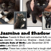 Jasmine and Shadow (A brother and sister from CatzRUs)