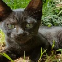 Adopting a black rescue-cat is like saving a rhino!