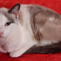 Lost  Cat in Waterkloof Glen