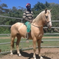Superb Palomino For Sale