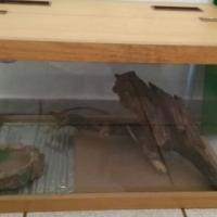 slangkas/ reptiel