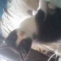 female kitty