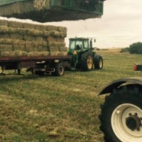 2nd Cut Small squares of lucerne grade AA