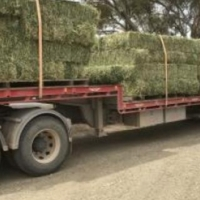 Lucerne Hay Bales great weight 25kg