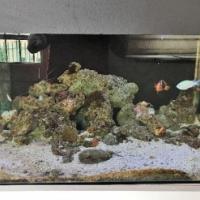 Established and Running 18 month Marine aquarium  (250L+ 150L)