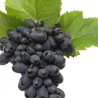 Slush Mix Grape 11Lt