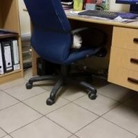 Lessenaars x 2 , boekrak , rekenaar stoel en laai kabinet.