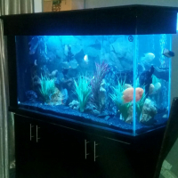 Large Freshwater Aquarium For Sale