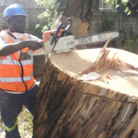 Midrand Treefelling and Siteclearing Stump removal,Bush pruning and tree removal 0734421108