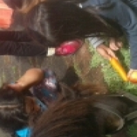 ponies for party and event hire