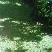 Grass en all we grass kzn cont : 0722129857