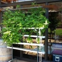 Hydroponic system for saleHydroponic system for sale
