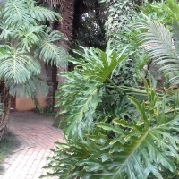 Garden Cottage in beautiful natural treed garden