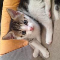 Kitten's 8 weeks old