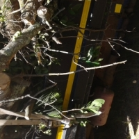 Knowle Tree Services- Plots clearing;Stumps removal & All Yard clean up