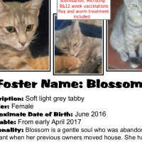 Blossom is looking for a home - a young mamma-cat rescued by CatzRUs, Pretoria East.