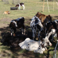Farm Plots to rent ON FARM IN HUMANSDORP Near Jeffreys Bay Eastern Cape