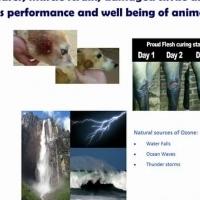 O zone Animal Treatment