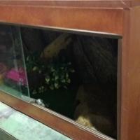 Snake cage for sale