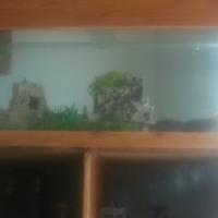tank and cupoard