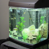 Fish tank with pump, filter, heater and other accessories