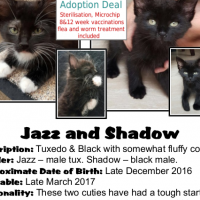 Jazz and Shadow (two loving brothers from CatzRUs)