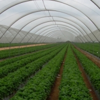Green House for sell South Africa  0719430012 ,Green House for sell Gauteng ,Polokwane ,Mpumalanga