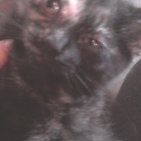 Five kittens available to good home