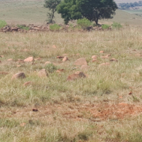 27 HECTARE SMALLHOLDING FOR SALE IN BRONKHORSTSPRUIT AREA.