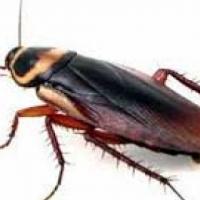 Pest contol in East Rand and Pretoria
