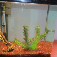 Boyu fish tank 40 litre