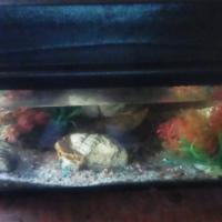 2×Fish tanks