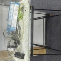 Medium Fish Tank + Accessories