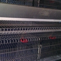 EGG LAYING CAGES