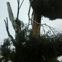 New Era Tree Fellers