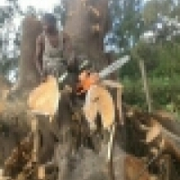A-Z TREE FELLING AND GARDEN SERVICE.