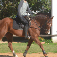 Beautiful Thoroughbred gelding for sale