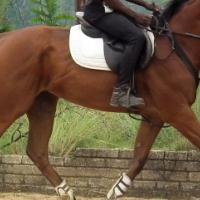 Ideal child or junior horse