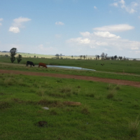 24 hectares next to N2 Ermelo