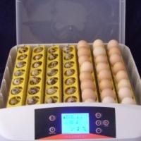Incubators. 12 volt battery AND 220 Volt mains. Digital Automatic