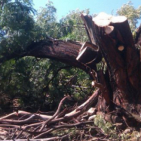 Stump Removal Experts At Vaal Tree Fellers 0607521660