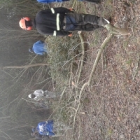 Knowle Tree Services- Bush clearing in Eastern Cape