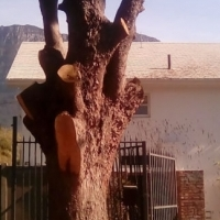 Rubble Removal and Site Clearance at Vaal Tree Fellers 0607521660