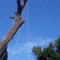 Durban tree fellers