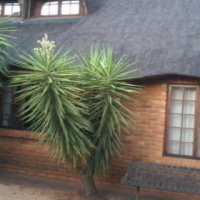 Grand double-storey thatch roofed home on big stand