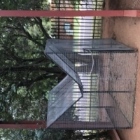 Bird Ladder trap