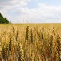 Buyer looking for a farm in Gauteng close or next established area or townships
